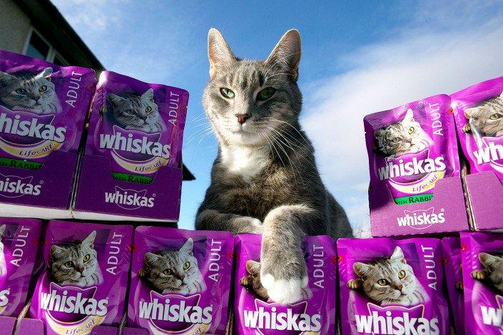 Cat with cat food