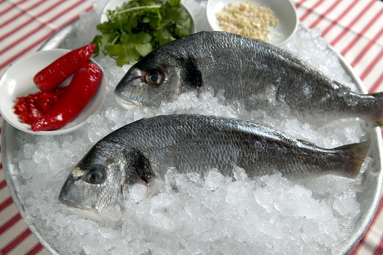 Fish photograher