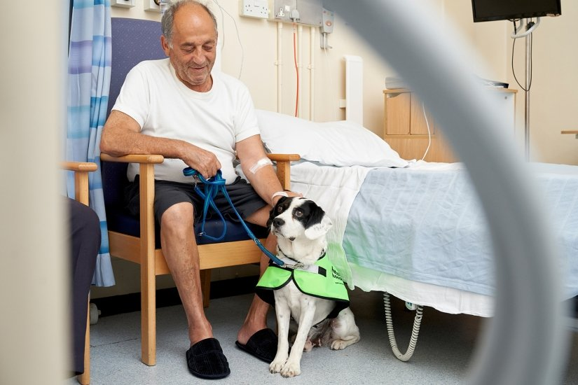 Pets in Hospital's for the NHS